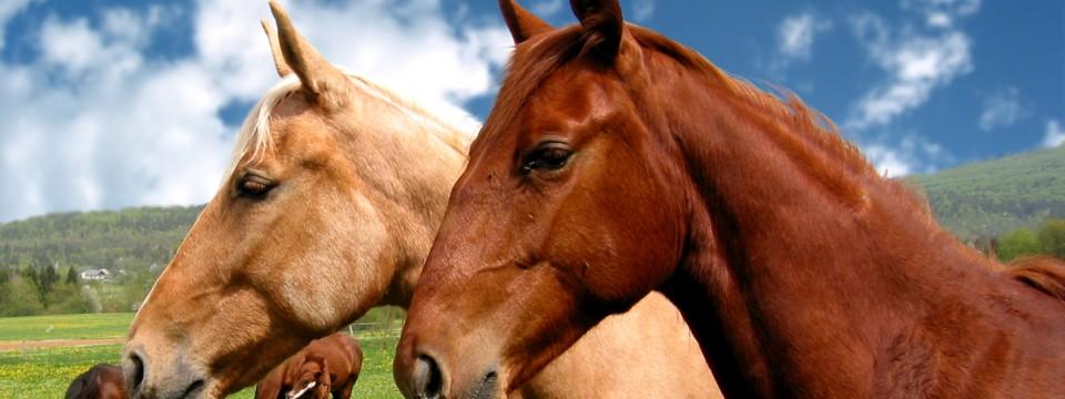 Animal Care Powerful Theme